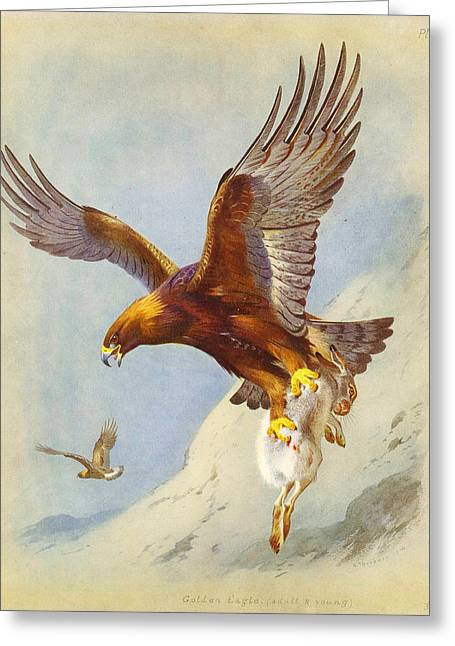 Scene Greeting Cards - Golden Eagle Greeting Card by Celestial Images