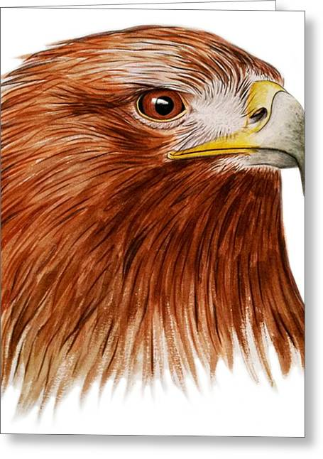 Eagle Feathers Greeting Cards - Golden Eagle Greeting Card by Ele Grafton