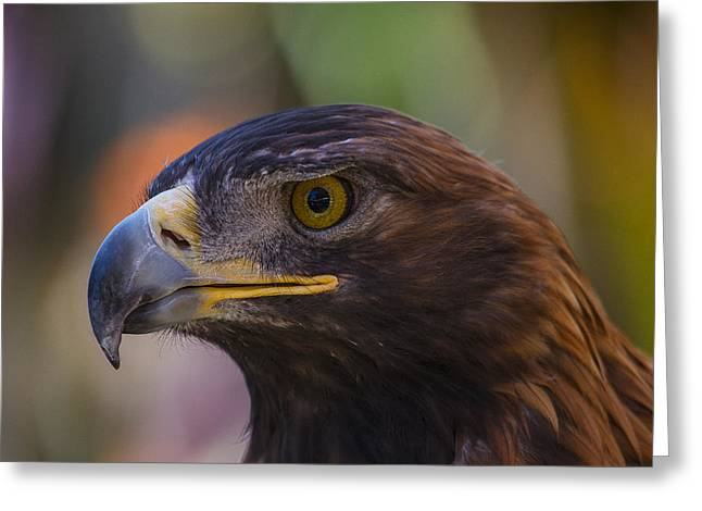 Golden Brown Greeting Cards - Golden Eagle Greeting Card by Garry Gay