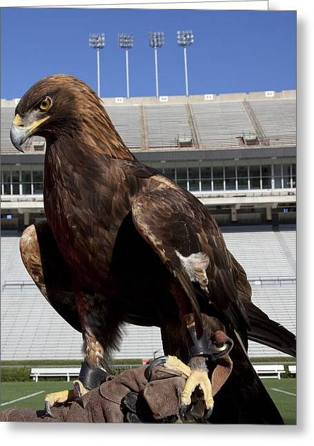 Alabama Campus Greeting Cards - Golden Eagle of Auburn University Greeting Card by Mountain Dreams
