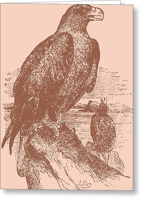 Eagle Drawings Greeting Cards - Golden Eagle on Copper Greeting Card by