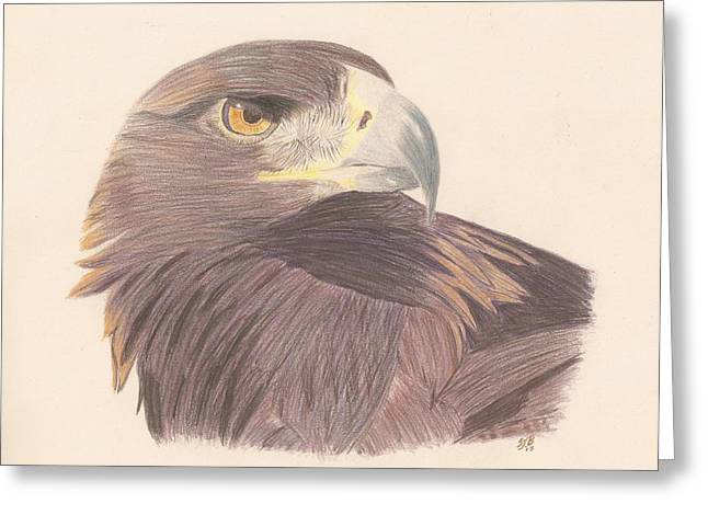 Golden Brown Drawings Greeting Cards - Golden Eagle Study Greeting Card by Sheila Byers