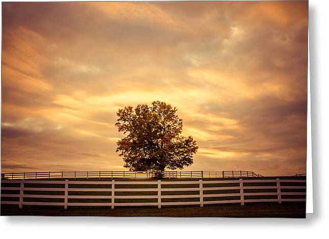 Maine Farms Greeting Cards - Golden Evening Greeting Card by Nancy Greindl