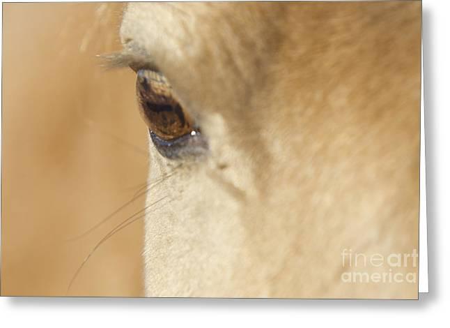 Taos Greeting Cards - Golden Eye Greeting Card by Carol Walker
