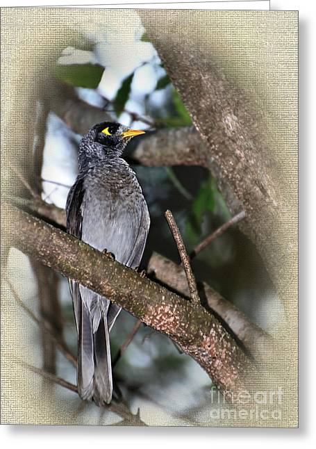 Australian Native Bird Greeting Cards - Golden Eye Greeting Card by Kaye Menner