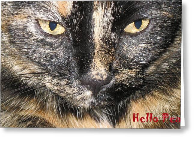Nice Greeting Cards - Golden Eyes. Hello Pearl Greeting Card by Oksana Semenchenko