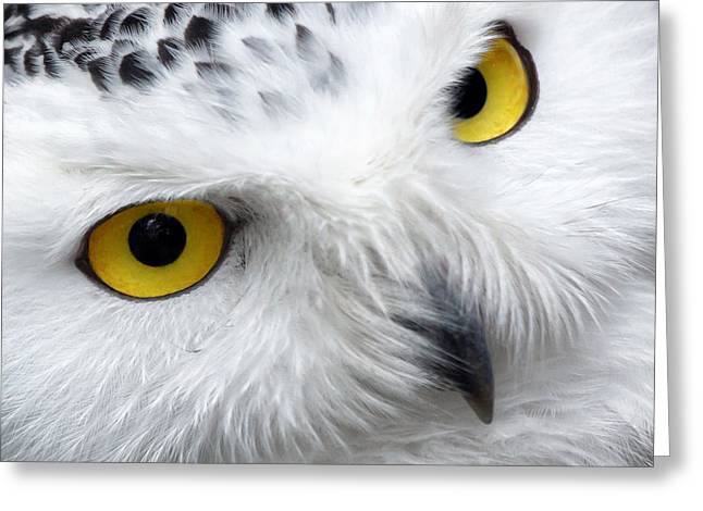 Lovely Owl Greeting Cards - Golden Eyes Greeting Card by Mountain Dreams
