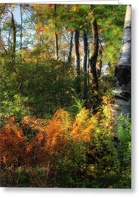 Connecticut Landscapes Greeting Cards - Golden Fern Greeting Card by Bill  Wakeley