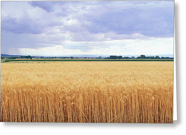 Field. Cloud Greeting Cards - Golden Field Under Overcast Sky Greeting Card by Panoramic Images
