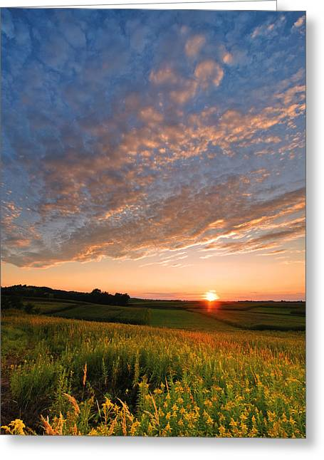 Golden Fields Greeting Card by Davorin Mance
