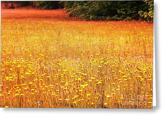 Religious Pictures Digital Art Greeting Cards - Golden Pastures Greeting Card by Matthew Seufer