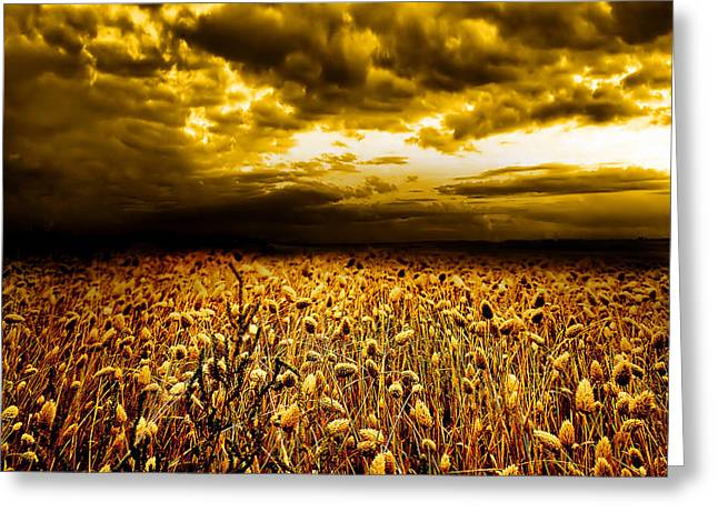 Field. Cloud Greeting Cards - Golden Fields Greeting Card by Photodream Art