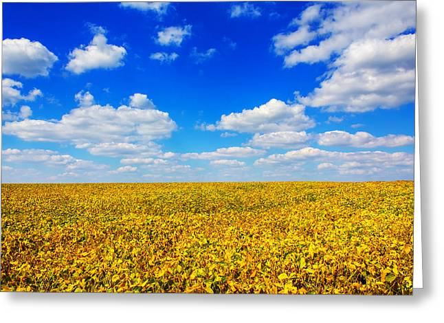 Open Field Greeting Cards - Golden Fields Under Puffy Clouds Greeting Card by Bill Tiepelman