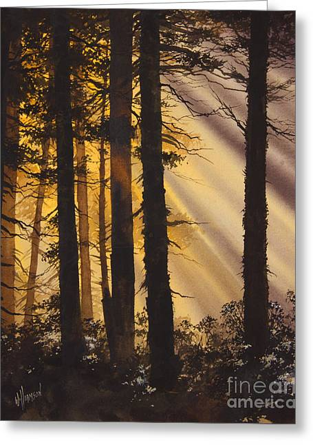 Light Framed Prints Greeting Cards - Golden Forest Light Greeting Card by James Williamson