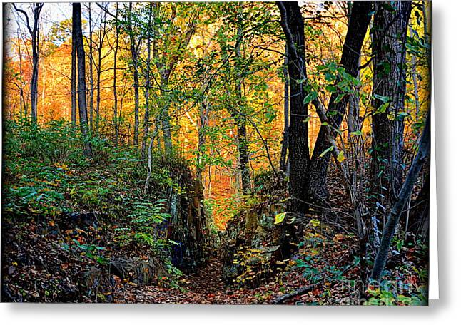 Gold Leave Greeting Cards - Golden Forest Greeting Card by Richard W Burdett