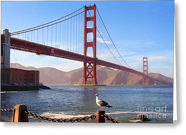 Californian Greeting Cards - Golden Gate Seagull Greeting Card by Inge Johnsson