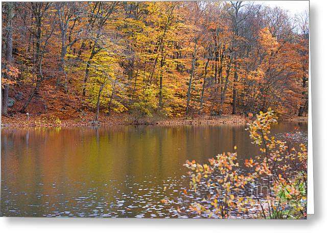 Golden Glory Greeting Card by A New Focus Photography
