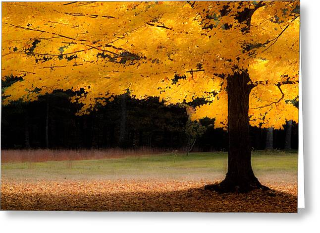 Fall Colors Greeting Cards - Golden glow of autumn fall colors Greeting Card by Jeff Folger