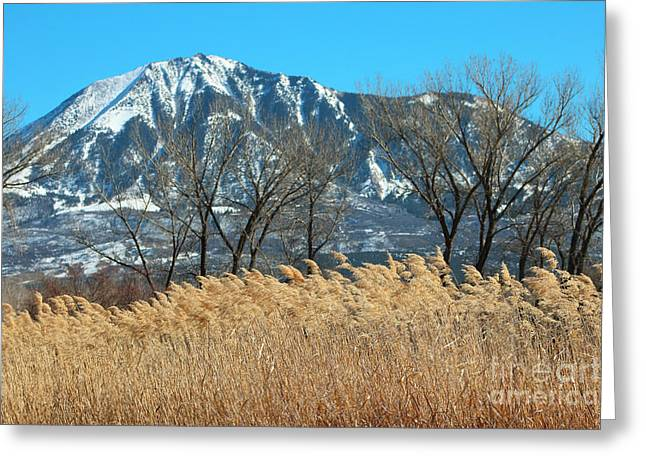West Fork Greeting Cards - Golden Grain Of Home CO Greeting Card by Dale Jackson