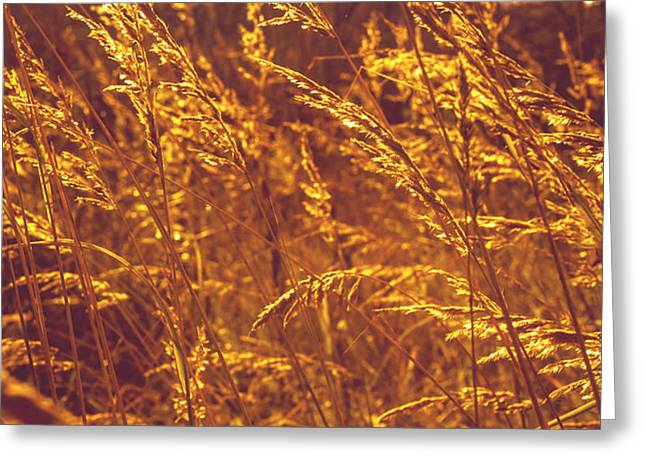 Unique Art Greeting Cards - Golden Grass  Greeting Card by Jenny Rainbow