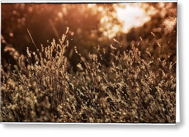Green Day Greeting Cards - Golden Grass Greeting Card by Todd and candice Dailey