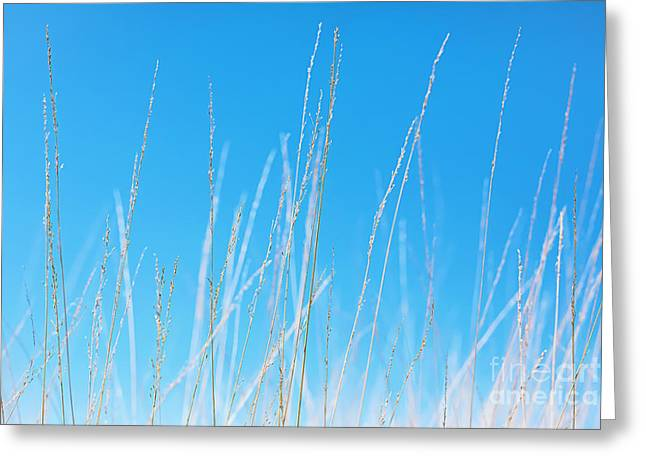 Bathroom Prints Greeting Cards - Golden Grasses against a Clear Blue Sky Greeting Card by Natalie Kinnear