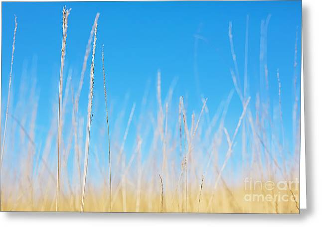 Bathroom Prints Greeting Cards - Golden Grasses on a Sunny Day Greeting Card by Natalie Kinnear