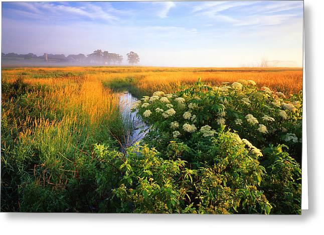 Golden Grassy Glow Greeting Card by Ray Mathis
