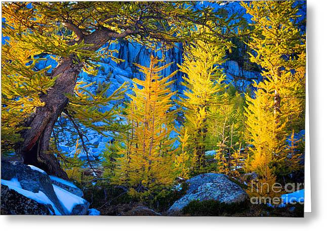 Alpine Greeting Cards - Golden Grove Greeting Card by Inge Johnsson