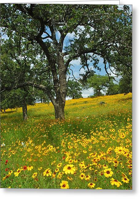 Wildflowers Greeting Cards - Golden Hillside Greeting Card by Robert Anschutz