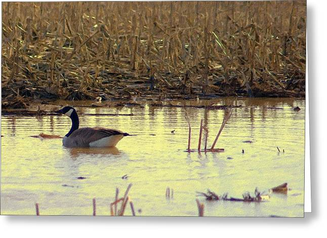 Cornfield Drawings Greeting Cards - Golden Hour On Corn Field With Canada Goose  Greeting Card by Rosemarie E Seppala