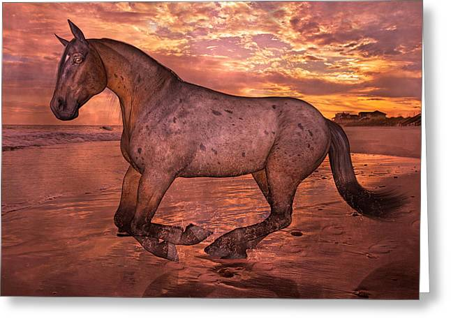 Appaloosa Greeting Cards - Golden Hour Pause Greeting Card by Betsy C Knapp