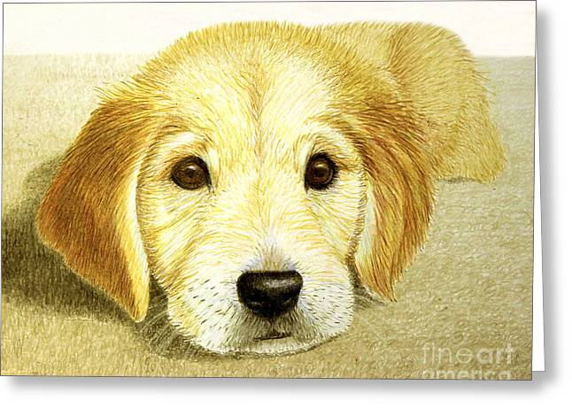 Golden Brown Drawings Greeting Cards - Golden Lab Pup Greeting Card by Jacqueline Barden