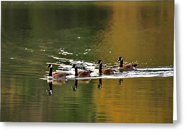 Geese Pyrography Greeting Cards - Golden Lake Greeting Card by Menachem Ganon
