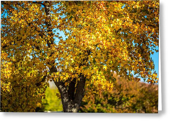 Golden Leaves Of Autumn Greeting Card by Mike Lee