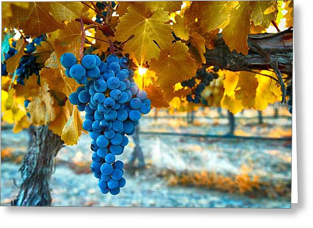 Golden Leaves With Grapes Greeting Card by Lynn Hopwood