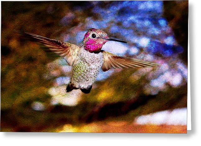 Duchess Greeting Cards - Golden Light Hummingbird Flight Greeting Card by Jeanette Brown