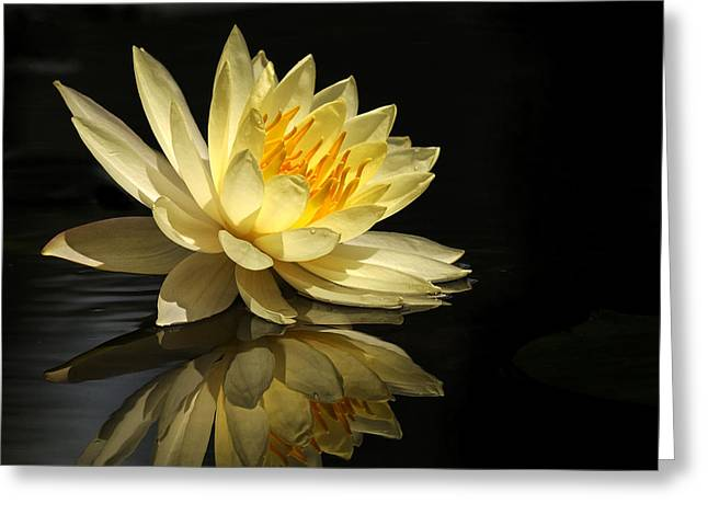 Flotus Greeting Cards - Golden Lotus Greeting Card by Carol Eade