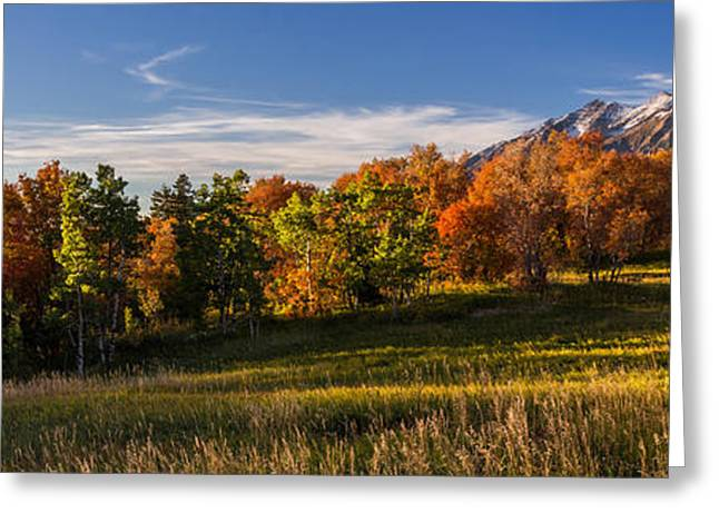Exposure Greeting Cards - Golden Meadow Greeting Card by Chad Dutson