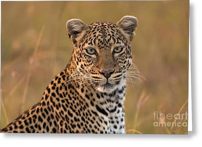 Golden Leopard Greeting Cards - Golden Moment Greeting Card by Ashley Vincent