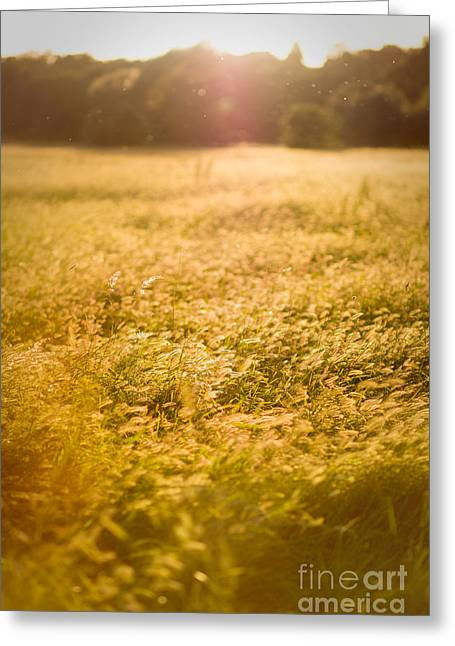 Greensward Greeting Cards - Golden. Greeting Card by Monika Bajor