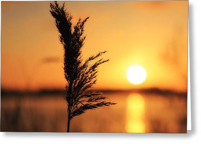 Golden Morning Greeting Card by LHJB Photography