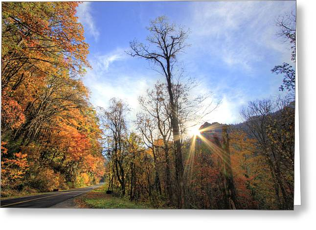 Scenic Drive Greeting Cards - Golden Morning Greeting Card by Jackie Novak