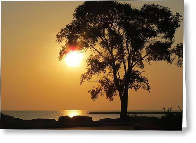 Golden Morning Greeting Card by Kay Novy