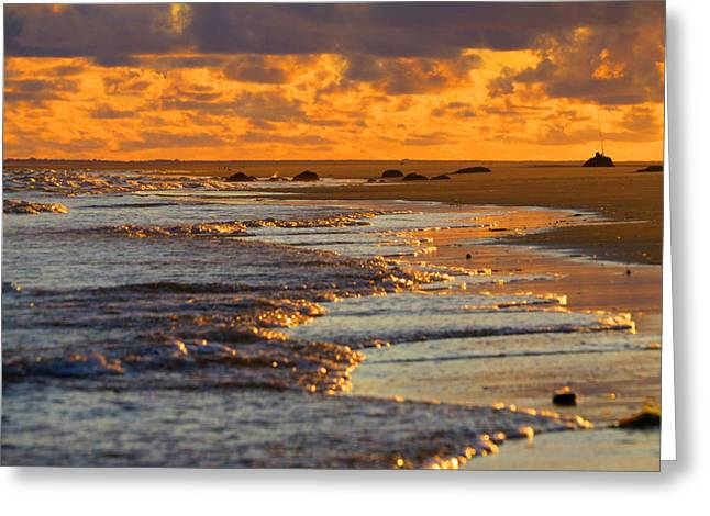 East Dennis Ma Greeting Cards - Golden Morning Light Greeting Card by Dianne Cowen