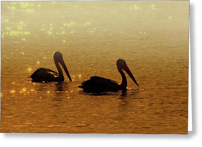 Avian Greeting Cards - Golden Morning Greeting Card by Mike  Dawson
