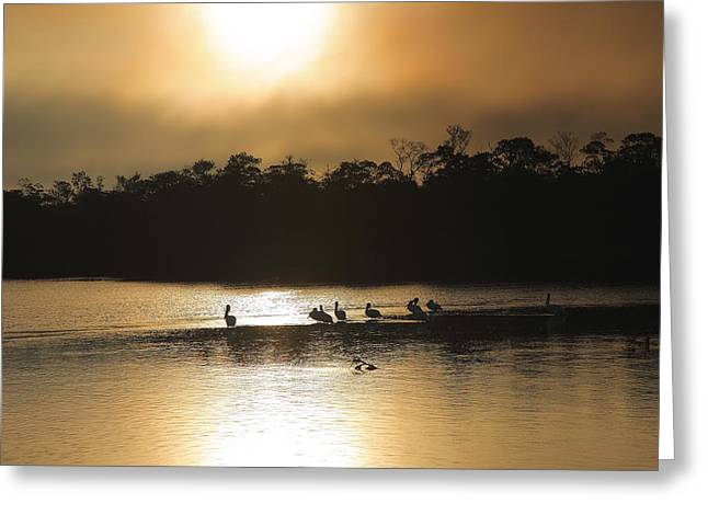 Golden Morning On Ding Darling Greeting Card by Steven Ainsworth