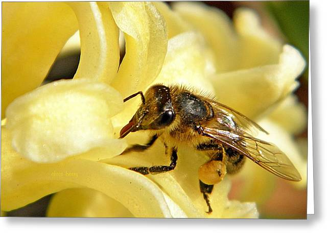 Patterned Marking Greeting Cards - Golden Nectar  Greeting Card by Chris Berry