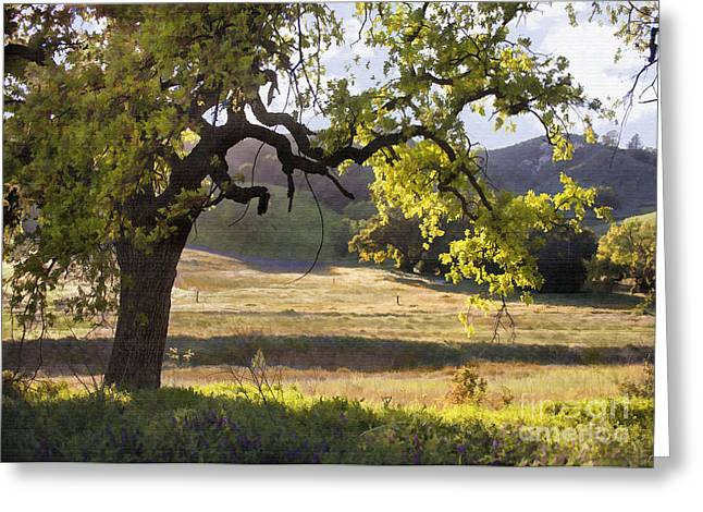 Golden Oaks Greeting Card by Sharon Foster