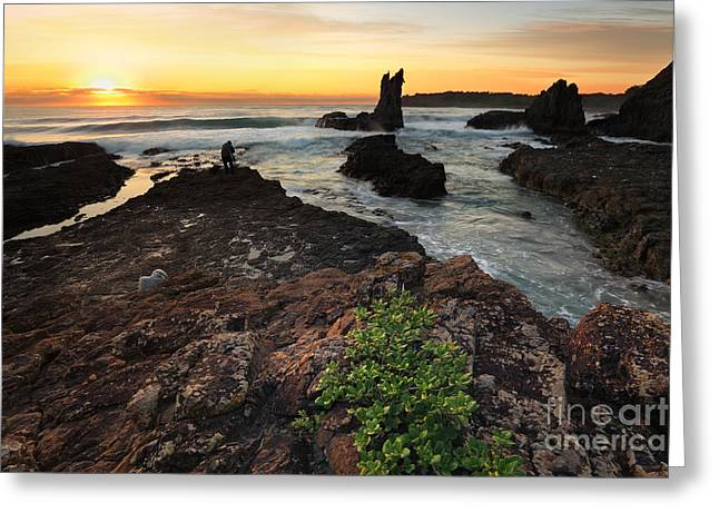 Cathedral Rock Greeting Cards - Golden orange sunrise Cathedral Rock NSW Australia Greeting Card by Leah-Anne Thompson